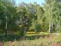 039_omsk_2008